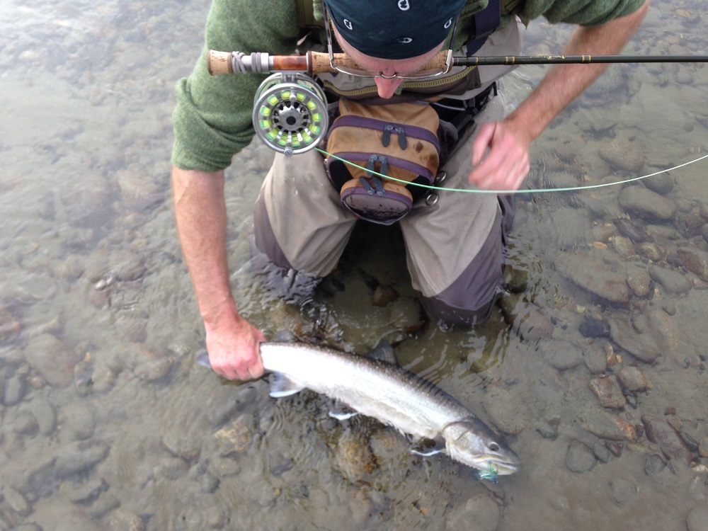 bull trout, bc bull trout, fly fishing, bull trout fly fishing, squamish river bull trout