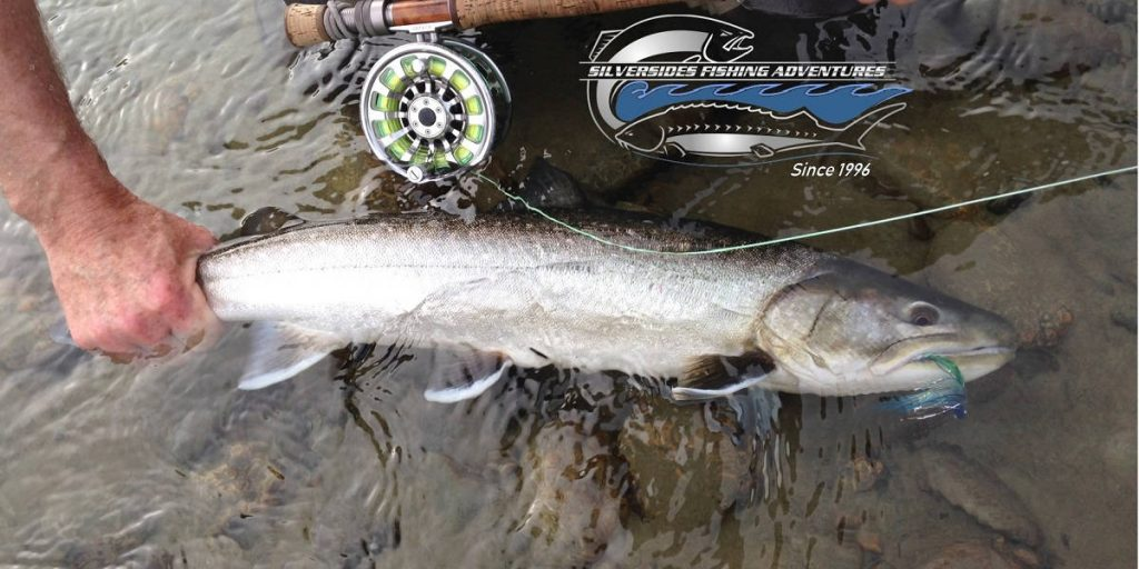 trout fishing vancouver, bull trout, bc bull trout, fly fishing, bull trout fly fishing, squamish river bull trout