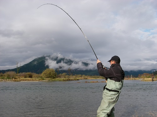 chum salmon fishing, harrison river fishing, chum salmon fishing harrison river, salmon fishing canada