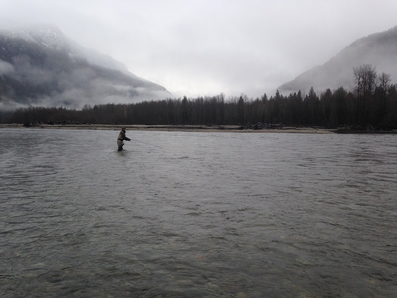 trout fishing vancouver 2020, trout fishing, trout fishing vancouver, trout fly fishing, trout fly fishing vancouver, bull trout fishing, squamish river fly fishing